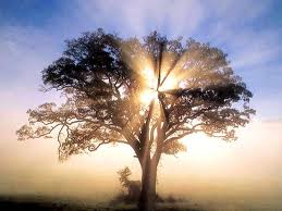 The light in the tree.
