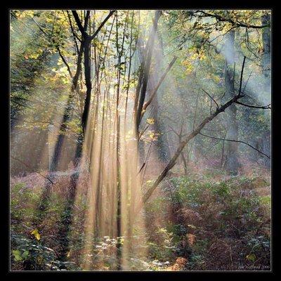 tree.light