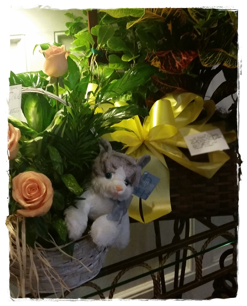 Flowers from Castaway Cats